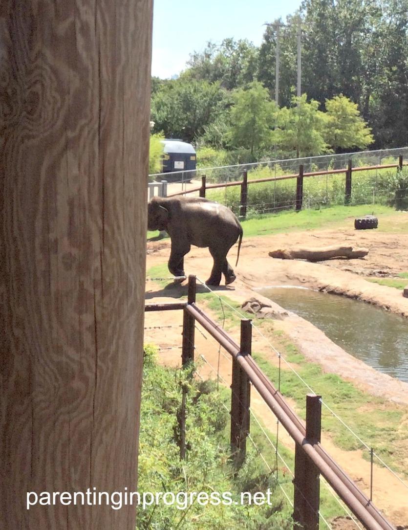 zoo41